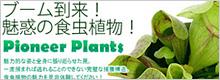 ブーム到来!魅惑の食虫植物