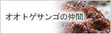 オオトゲサンゴ科