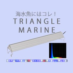 TRIANGLE MARINE