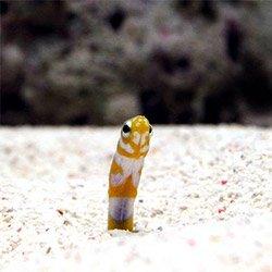 砂の中でかくれんぼ ガーデンイール特集