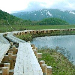 尾瀬、会津高原の湿生植物
