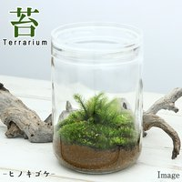 苔Terrarium ヒノキゴケ ガラスボトルL 説明書付 テラリウムキット