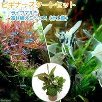 (水草)ビギナースタートセット ネオンテトラ(10匹) +ミックスエンゼルフィッシュ Sサイズ(2匹)