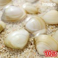 貝 生餌 エサ用活イソハマグリ ミックス Sサイズ(10匹)