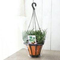 リプサリス バルチェリー 吊り鉢タイプ 5号(1鉢)