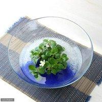 私の小さなアクアリウム ~シャリシャリグラスのフローティングプラントセット~