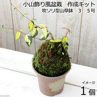 小山飾り風盆栽作成キット 吹ソリ型山草鉢 3.5号(1セット)