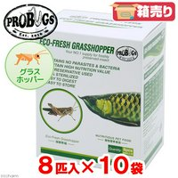 賞味期限:2020年11月2日 プロバグズ 真空生昆虫 グラスホッパー (8匹×10袋入) PROBUGS ECO-FRESH GRASSHOPPER 訳あり