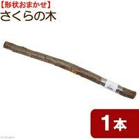 国産 天然素材のさくらの木 置き型パーチ 約60cm~70cm 形状おまかせ 1本