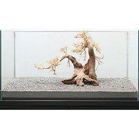 一点物 盆栽流木 大型水槽用 239715