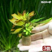 ライフマルチ(茶) 寄せ植えミックス(水中葉)(無農薬)(3個)