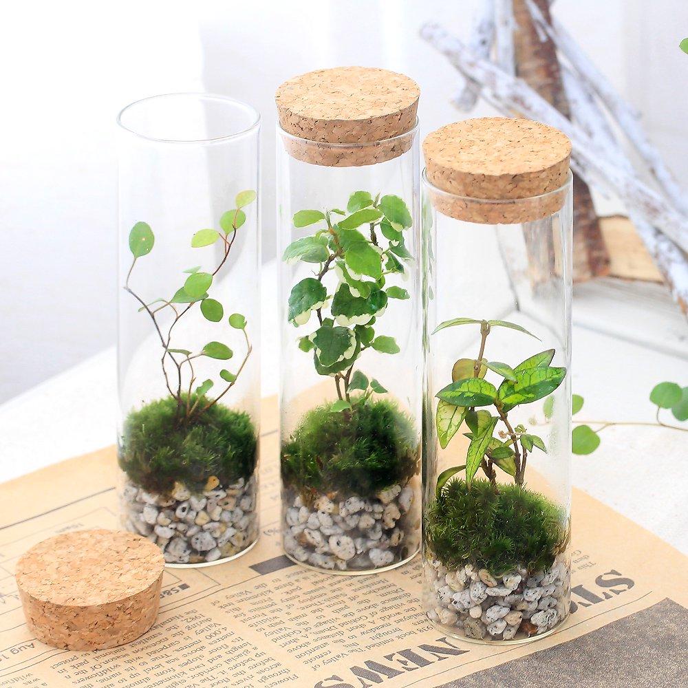 (観葉植物)苔Terrarium インテリアプランツ ミニ観葉1種植え スタンドガラス(1個) 北海道冬季発送不可