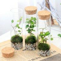 苔Terrarium インテリアプランツ ミニ1種植え スタンドガラス(1個) 北海道冬季発送不可