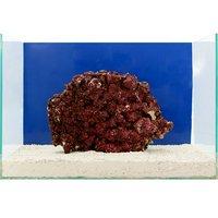 一点物 Real Reef Rock(リアルリーフロック)(Lサイズ) RR-036(1個)