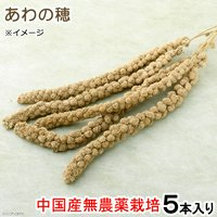 小動物の食事 あわの穂 5本入り おやつ 無農薬栽培 無添加 無着色