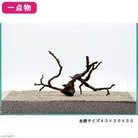 一点物 極上流木単体 45cm水槽用 220041