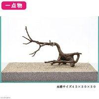 一点物 極上流木単体 45cm水槽用 137855