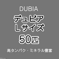 デュビア(アルゼンチンモリゴキブリ) Lサイズ(50匹)