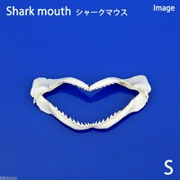 貝殻 シェルコレクション シャークマウス(サメの顎) Sサイズ(1個)(形状おまかせ)