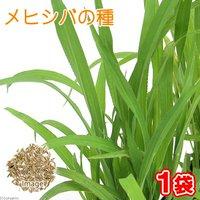 メヒシバの種(1袋)猫草 うさぎ 犬 猫 おやつ 種子