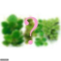 4種 おまかせ浮き草セット(無農薬)(各3株 計12株)