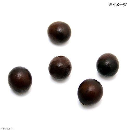 (ビオトープ)水辺植物 オオオニバスの種 原種(5粒)
