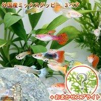 (水草)外国産ミックスグッピー(3ペア)+スプライト1種(3株セット)
