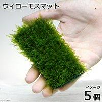 育成済 ウィローモス マット(無農薬)(5個)