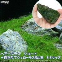ヘアーグラス ショート+巻きたて ウィローモス 風山石 SSサイズ(8cm以下)