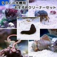 貝ヤドカリ 90cm水槽用 おすすめクリーナーセット コケ底砂の掃除(1セット)