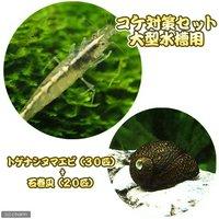 コケ対策セット 大型水槽用 トゲナシヌマエビ(30匹) + 石巻貝(20匹)
