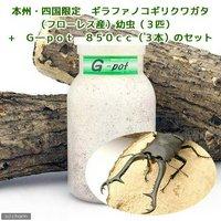 ギラファノコギリクワガタ(フローレス産)幼虫(3匹) + G-pot 850cc 3本(説明書付)