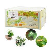 私のアクアリウム アクアテリア N190 メダカ飼育セット(生体植物付き)おしゃれ水槽セット