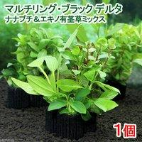 マルチリングブラック(黒) デルタ ナナプチ&エキノ有茎ミックス(水上葉)(1個)