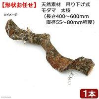 天然素材 吊り下げ式 モダマ 太枝(長さ400~600mm 直径55~80mm程度)