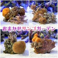 サンゴガーデン ソフトコーラル3種セット(1個)