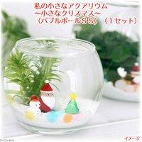 私の小さなアクアリウム ~小さなクリスマス~(バブルボールSS)(1セット)