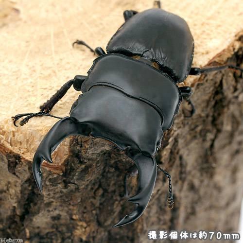 (昆虫)国産オオクワガタ 滋賀県愛知川産 幼虫(初〜2令)(3匹) 北海道航空便要保温