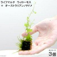 ライフマルチ(茶) ウィローモス+オーストラリアンノチドメ(無農薬)(3個)