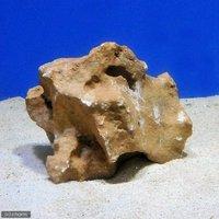 化石サンゴ バクテリア付き Sサイズ (10cm前後)(1個)(形状お任せ)