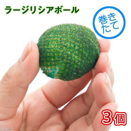(水草)巻きたて ラージリシアボール(無農薬)(3個)