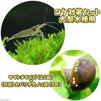 コケ対策セット 大型水槽用 ヤマトヌマエビ(20匹) +(B品)カバクチカノコ貝(3匹)
