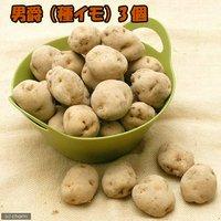 種イモ ジャガイモ 男爵(3個)(草木灰付き) 家庭菜園 北海道冬季発送不可