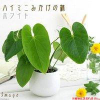 ハイミニみかげの鉢 ホワイト(φ9.5×H9.0cm)(ハイドロ苗9φに対応)