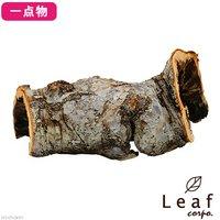 一点物 長野県小布施産 天然素材のりんごの木オブジェ AP-001 レイアウト
