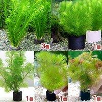 マルチリングブラック(黒) メダカ・金魚藻 (1セット)