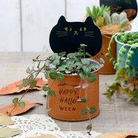 ハートカズラ(セロペギア ウッディー) ブリキキャラクター缶 黒猫(1鉢)