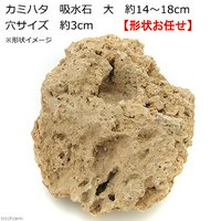 カミハタ 吸水石 大 約14~18cm 穴サイズ 約3cm テラリウム パルダリウム 着生 コケ