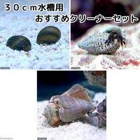 貝ヤドカリ 30cm水槽用 おすすめクリーナーセット コケ底砂の掃除(1セット)