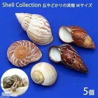 貝殻 おかやどかりの貝殻 Mサイズ おまかせ(殻口15~25mm)(5個入り)(形状おまかせ)